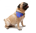Customized Pet Scarf Other Imprintables
